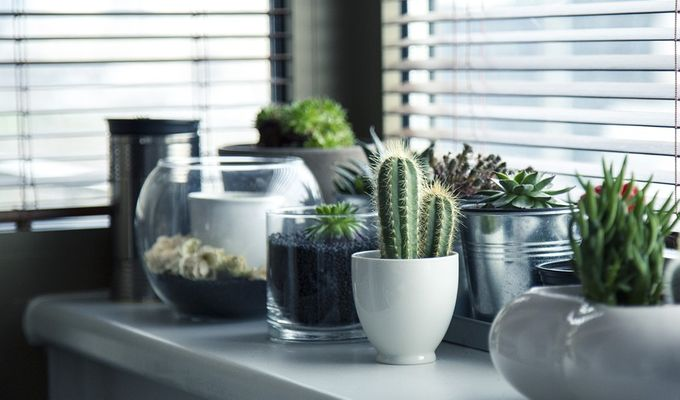 potted-plants-decor